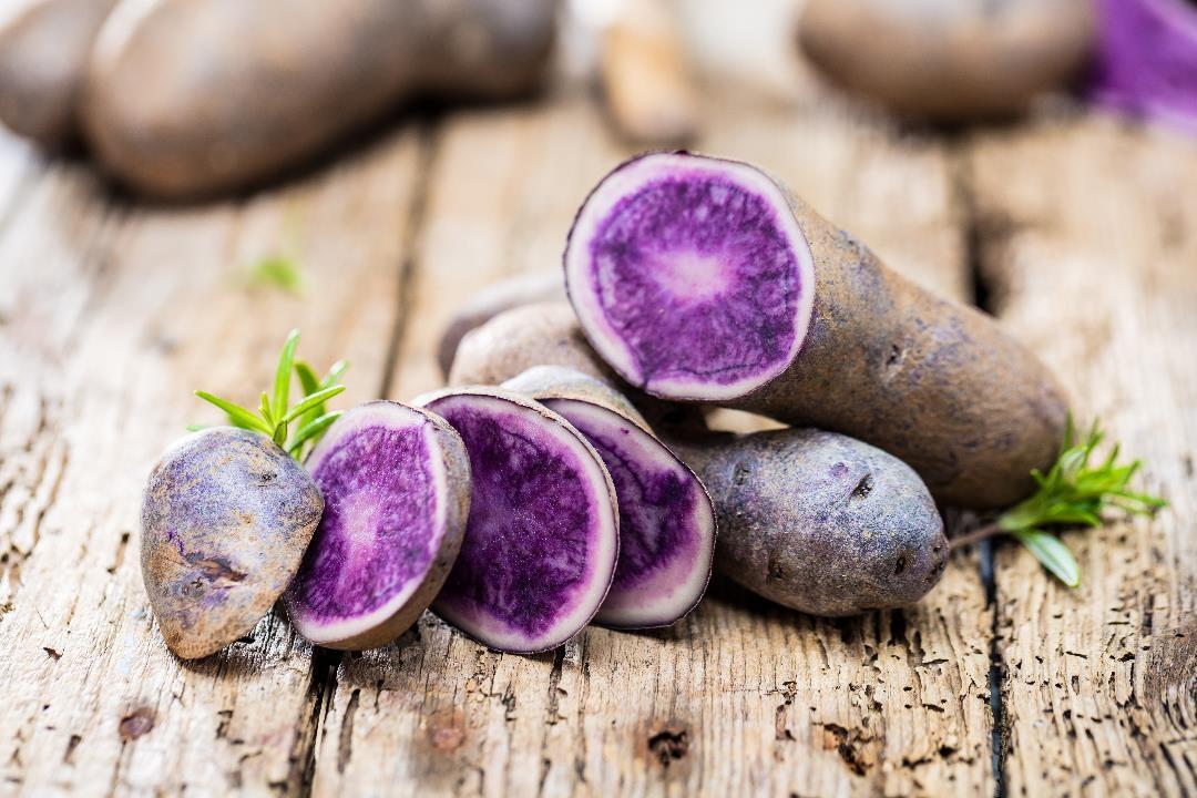 Blauer oder roter Kartoffelpüree